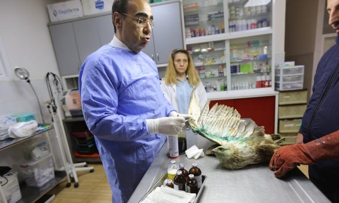 Büyükşehir Hayvan Hastanesi kurdu